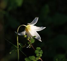 Spring Flower by gloriajean