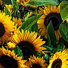 Pike Place Sunflowers by Dana Horne