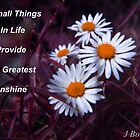 Small Things in Life  by J Bonanno