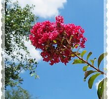 CREPE MYRTLE IN JULY by Claire Moreau