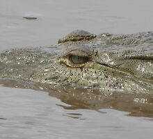 Crocodile in Rio Grande de Tarcoles, Costa Rica by LissMarie17