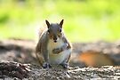 Grey Squirrel - Bute Park, Cardiff, Wales, UK by Artberry