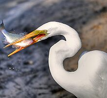 Egret Feast by Monte Morton