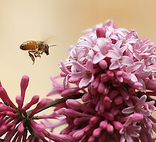 Buzzing Bee by KansasA