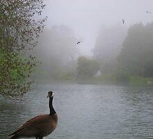 Wild Goose in the Fog by David Denny