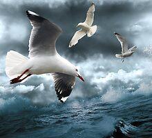 Albatross by Linda Lees