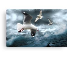 Albatross Canvas Print