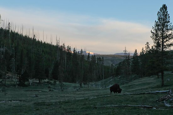Bison Solitude #2 by Ken McElroy