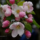 Blossom Time by DavesPhoto
