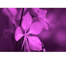 PInk Whirling Butterflies Photographic Print