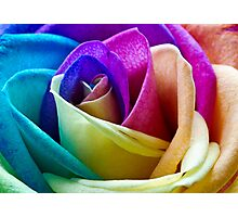 Multi Coloured Rose Photographic Print