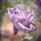 The Lavendar Rose by vigor
