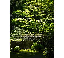 japanese gardens 2 Photographic Print