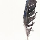 Crow feather by Sue Brown