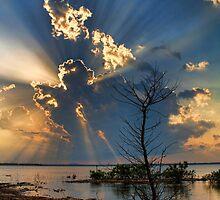 Love Those Crazed Rays by Carolyn  Fletcher