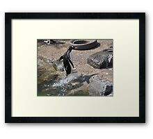 Jet Propelled Penguin!!!! Framed Print
