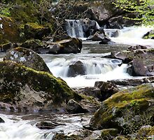 Hermitage Falls by dgscotland