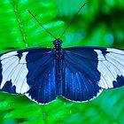 Butterfly on Green Fern by msqrd2