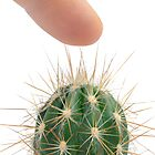 Pressing finger on cactus by Sami Sarkis