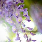Purple Sunlight by CandiMerritt
