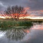 Lake Wendouree sunrise. by trevorb