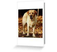 """Jake in Autumn..."" Greeting Card"