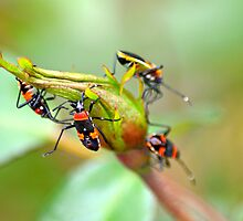 bugs or buds for breakfast? by Alison Hill