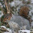 Squirreling Around by Edward Gunn