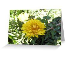 yellow Dandelion Greeting Card