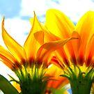 Sunshine Flowers by Honor Kyne