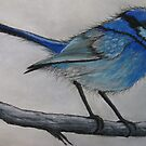 Little Blue Wren by Sally Ford