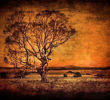 Outback Country by Clare Colins