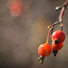 Simply Red by CandiMerritt