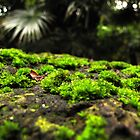 Rock Moss by Hannah Ruth