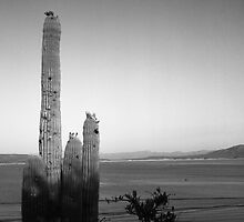 Saguaro at Lake Roosevelt by James2001
