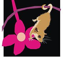 Pygmy possum by Matt Mawson
