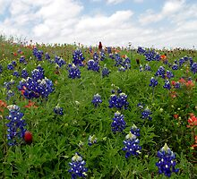 Bluebonnet Hill by Carolyn  Fletcher