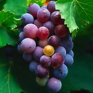 Grapes by StockFood