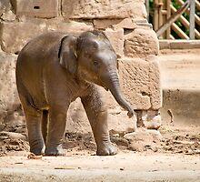 He Ain't No Dumbo by Paul-M-W