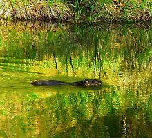 Beaver or Otter or Muskrat? by Elfriede Fulda