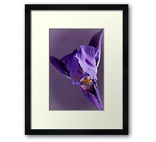 Purple Iris 1 Framed Print