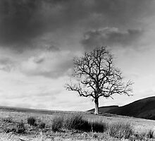 Tree from Lindinny Woods/Southern Upland Way, Scottish Borders by Iain MacLean