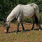 New Forest Pony by RedHillDigital
