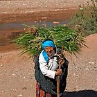 Harvesting, Skoura Morocco by Debbie Pinard
