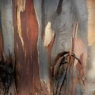 Bark Markings, Penguin, Tasmania, Australia. by kaysharp