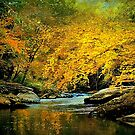 Slippery Rock Creek by Donnie Voelker