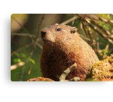 Close Encounter with a Groundhog Canvas Print