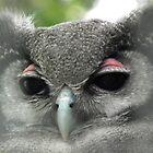 Wise Owl by MyPixx