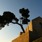 The Old City Tree by photoshot44