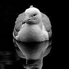 Herring Gull by Vasil Popov